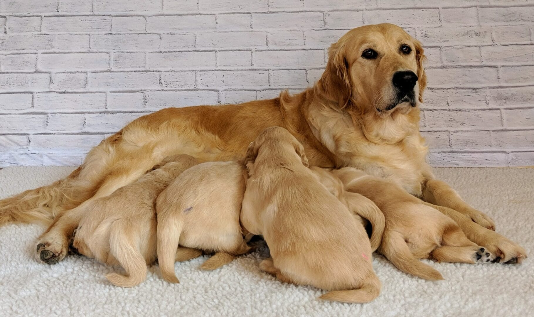 FOR PUPPY POLICY PAGE